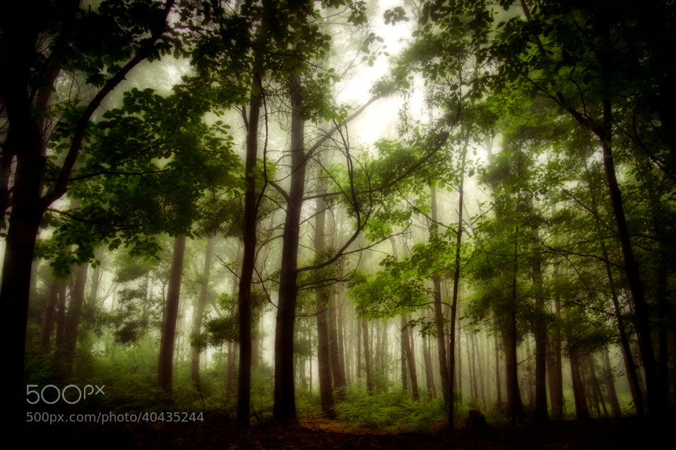 Photograph songs from the wood ii by Jeronimo Lomba on 500px