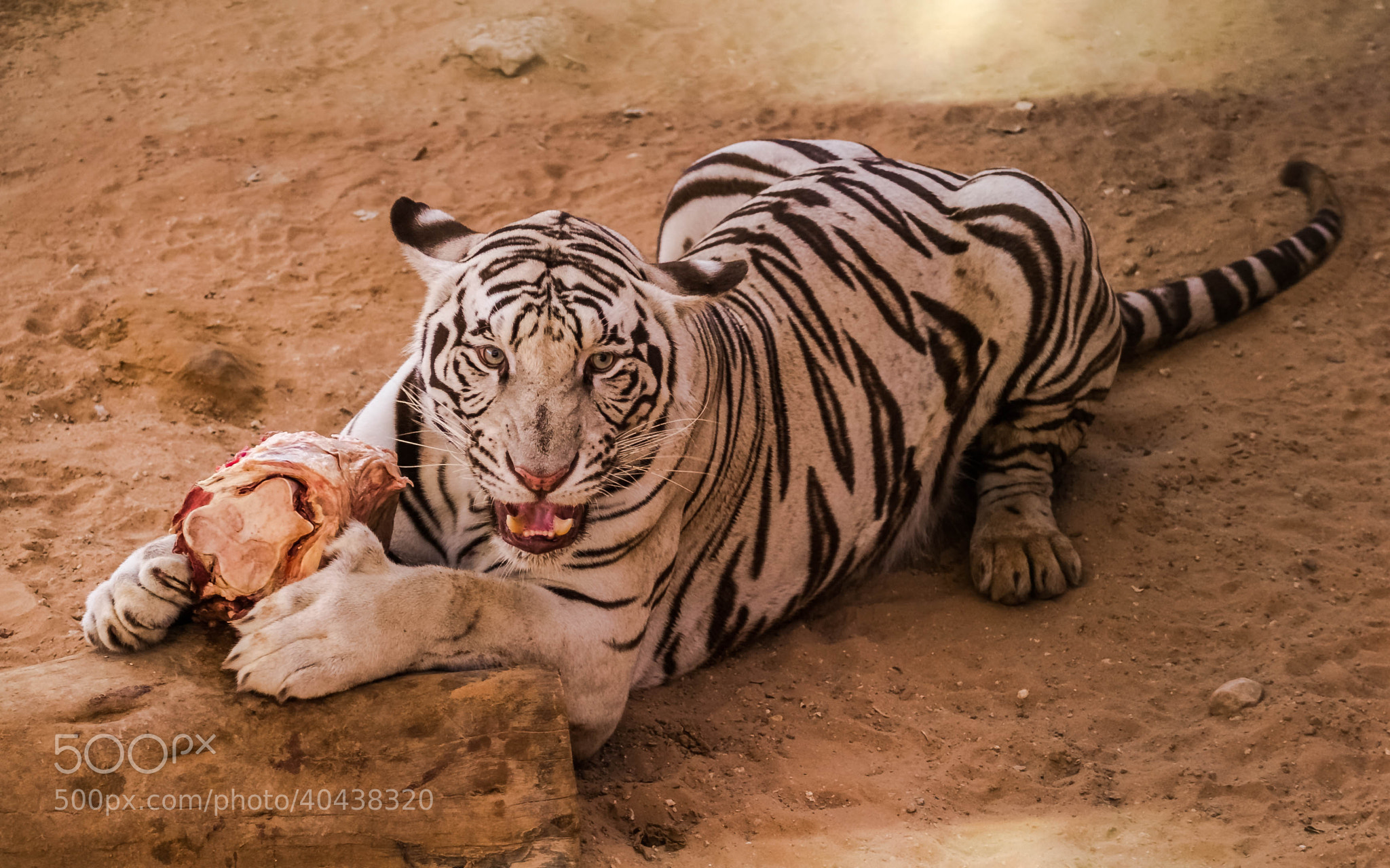 Photograph Its Mine by Reeshab Dutta on 500px