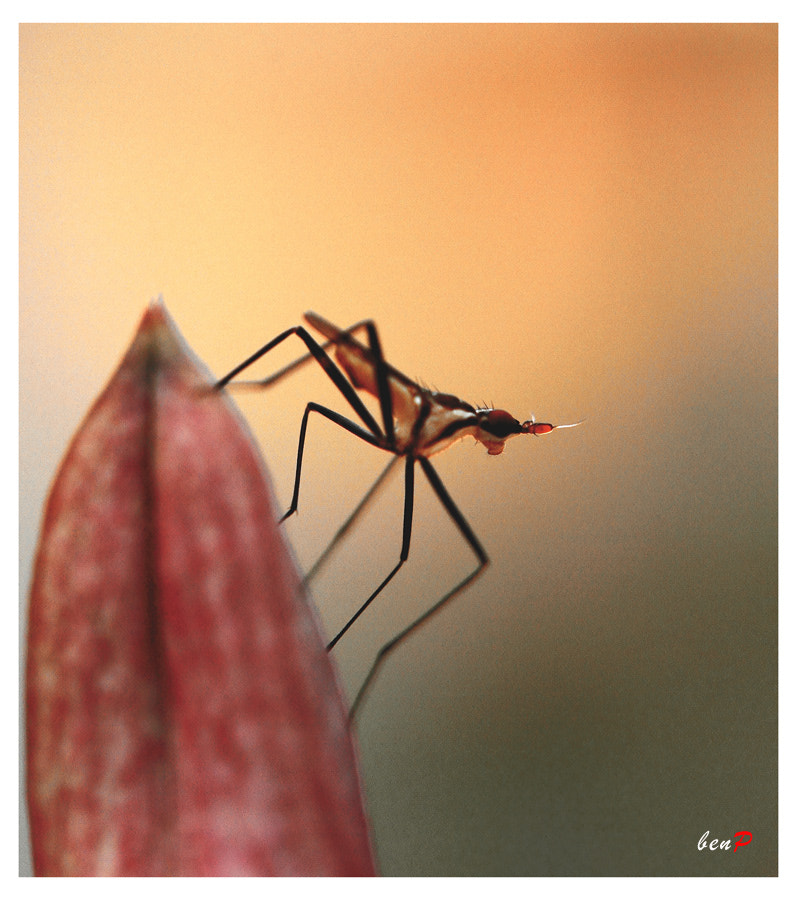 Photograph STAND ALONE by Benjamin Pelawi on 500px