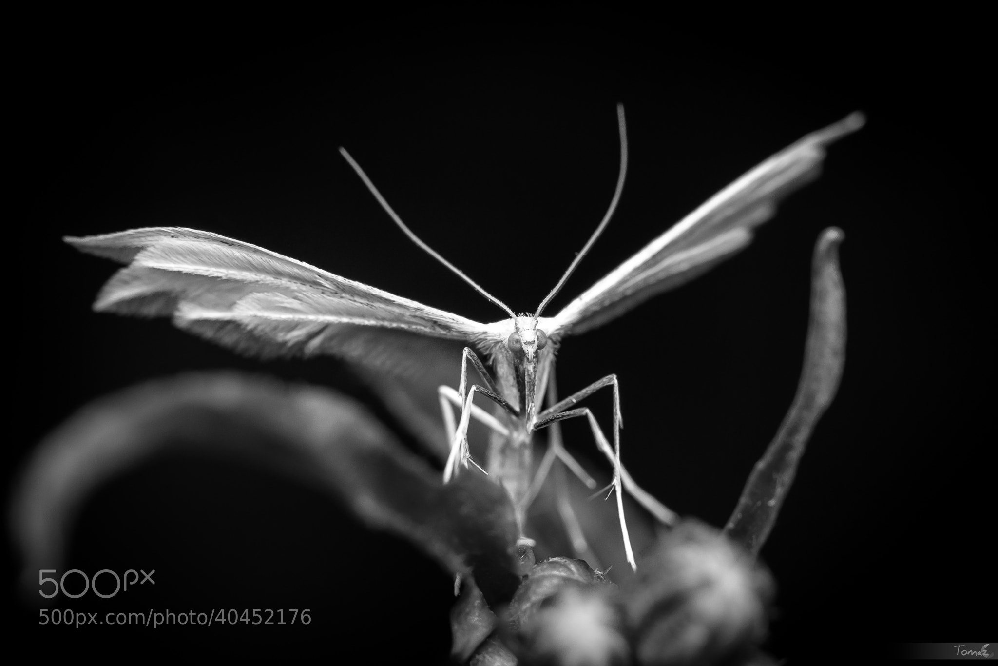 Photograph White Angel by Tomaž Klemenšak on 500px
