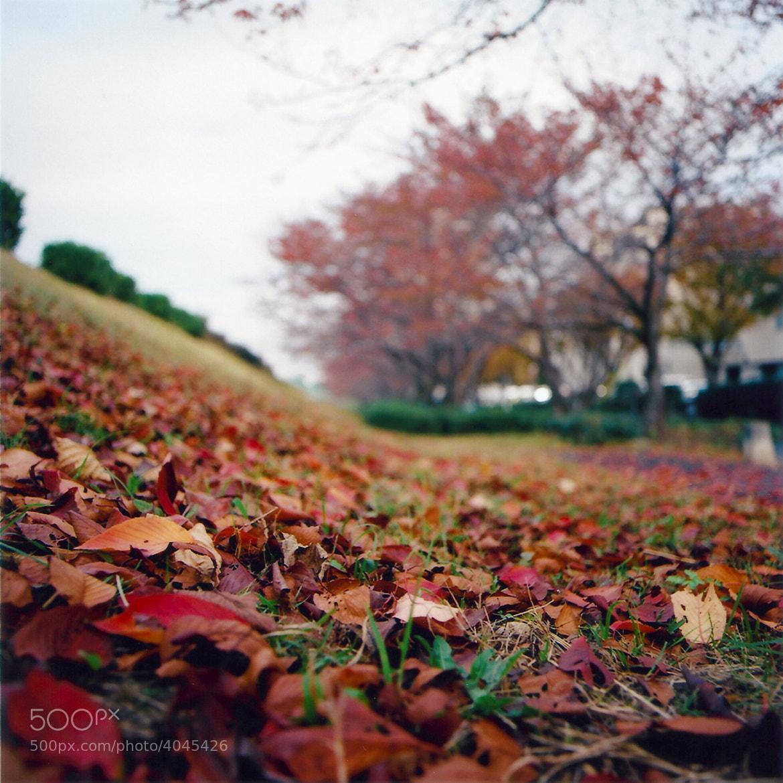 Photograph Autmn Leaves by Al Goye on 500px