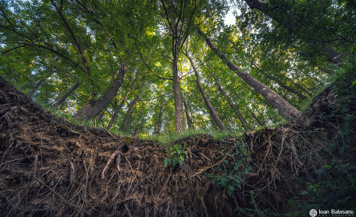 Photograph Roots to the sky by Ioan Balasanu on 500px