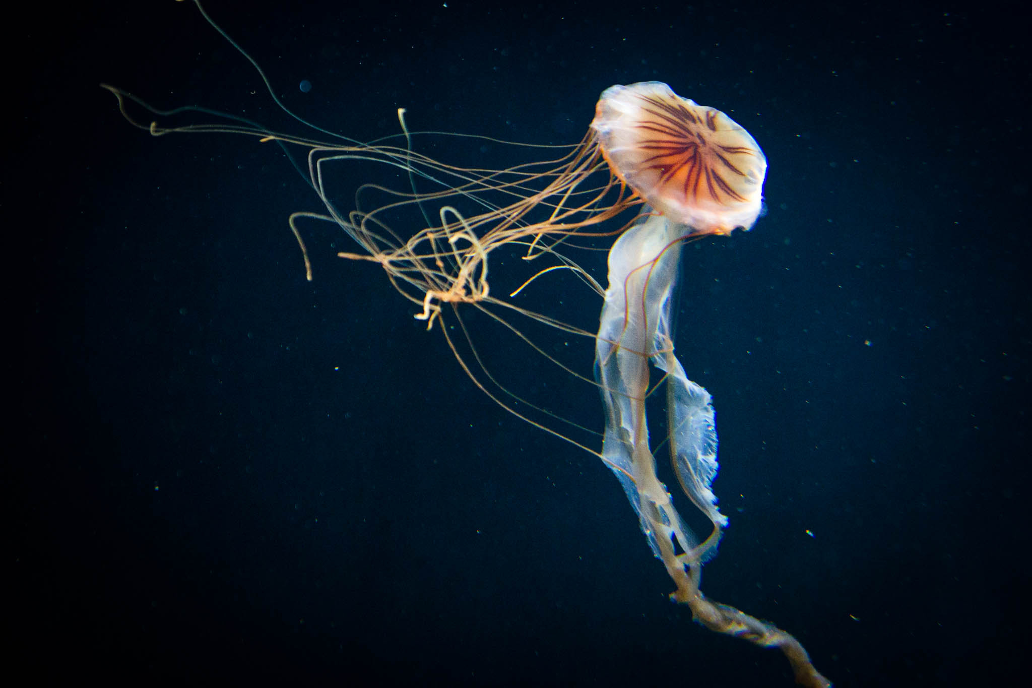 Photograph JELLYFISH by NOAM YOFFE on 500px