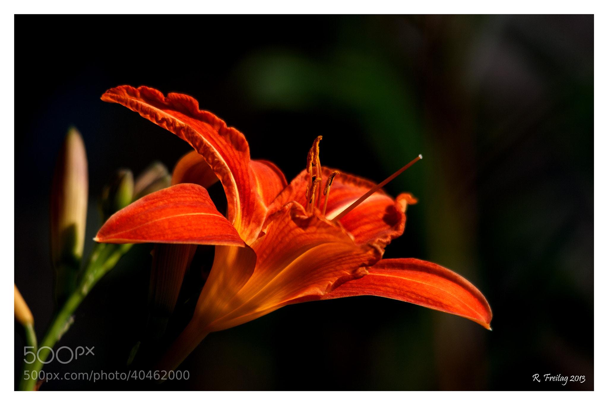 Photograph Orange by Regina F on 500px