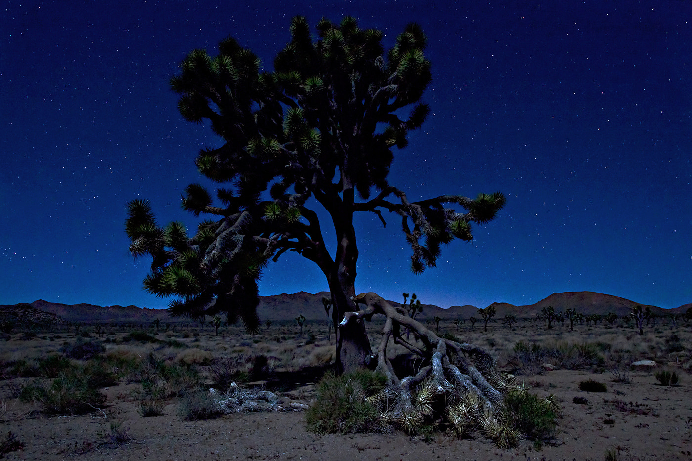 Photograph Joshua Tree by Moonlight by Dee Nichols on 500px