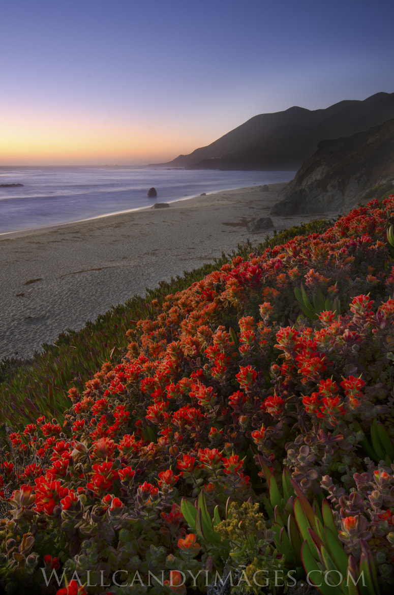 Photograph Sunset on Big Sur by Dustin Penman on 500px