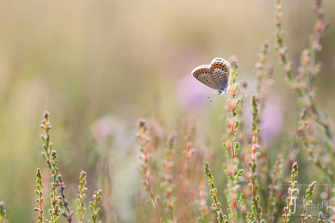 Photograph Butterfly by Judith Borremans on 500px