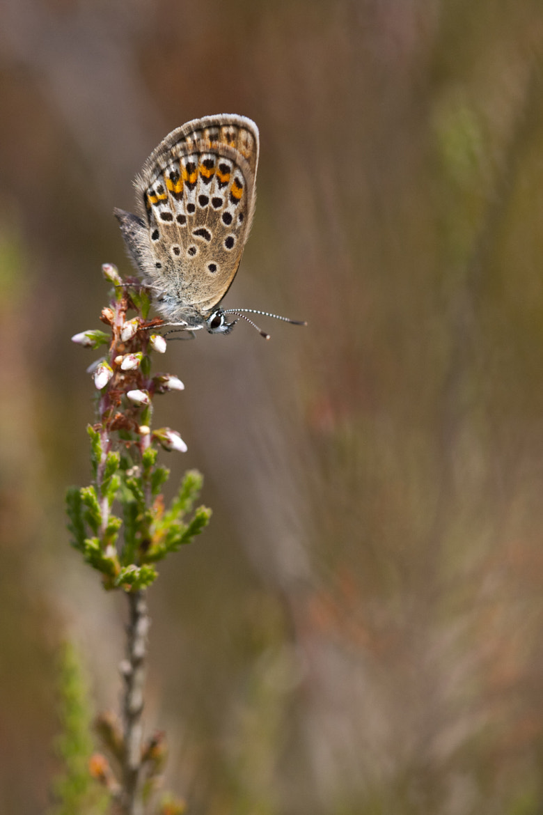 Photograph Silver Studded Blue by Max Brown on 500px