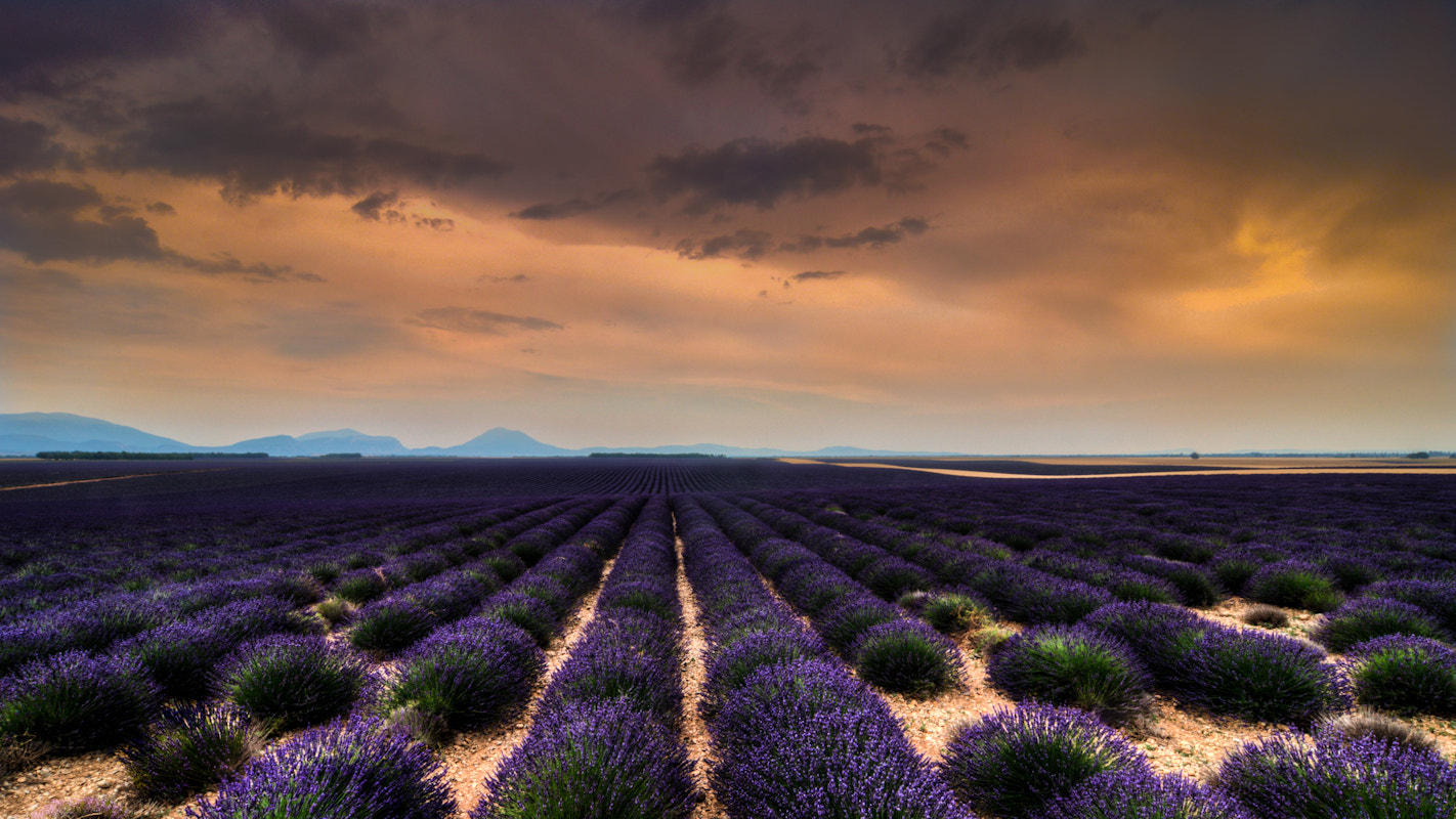 Photograph Lavender Landscape by sander chauvel on 500px