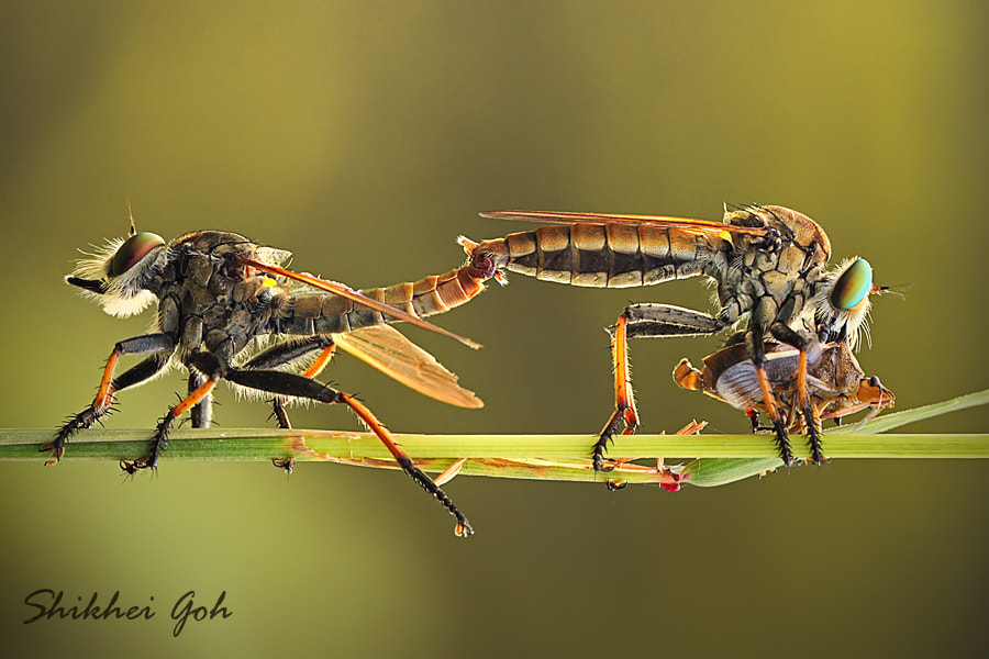Photograph Mating while Eating by shikhei goh on 500px
