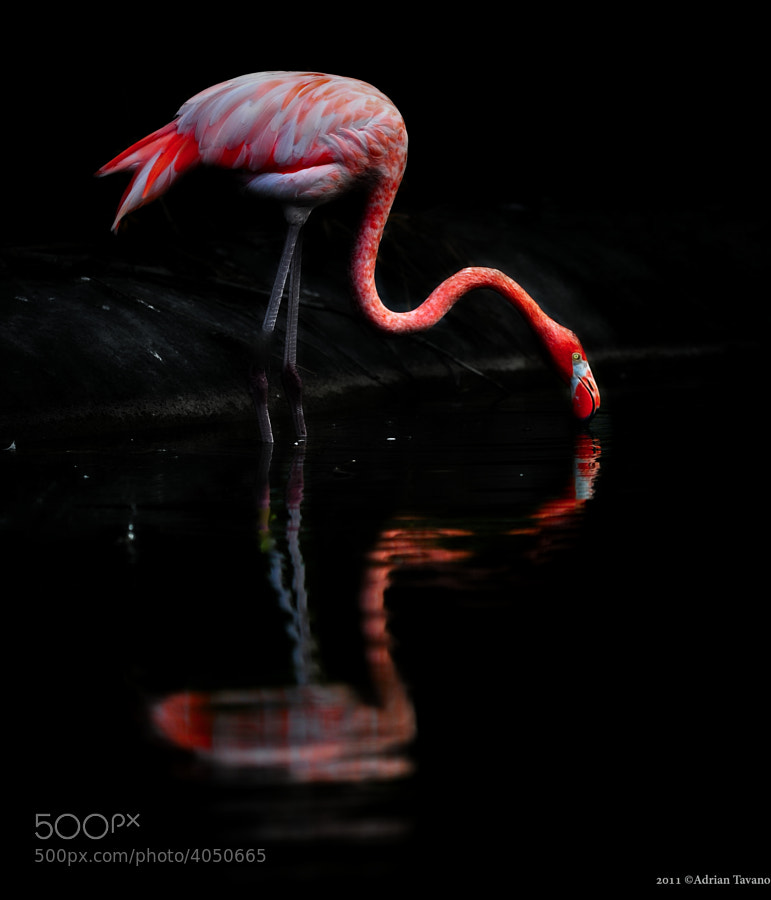 Click on image for full view!