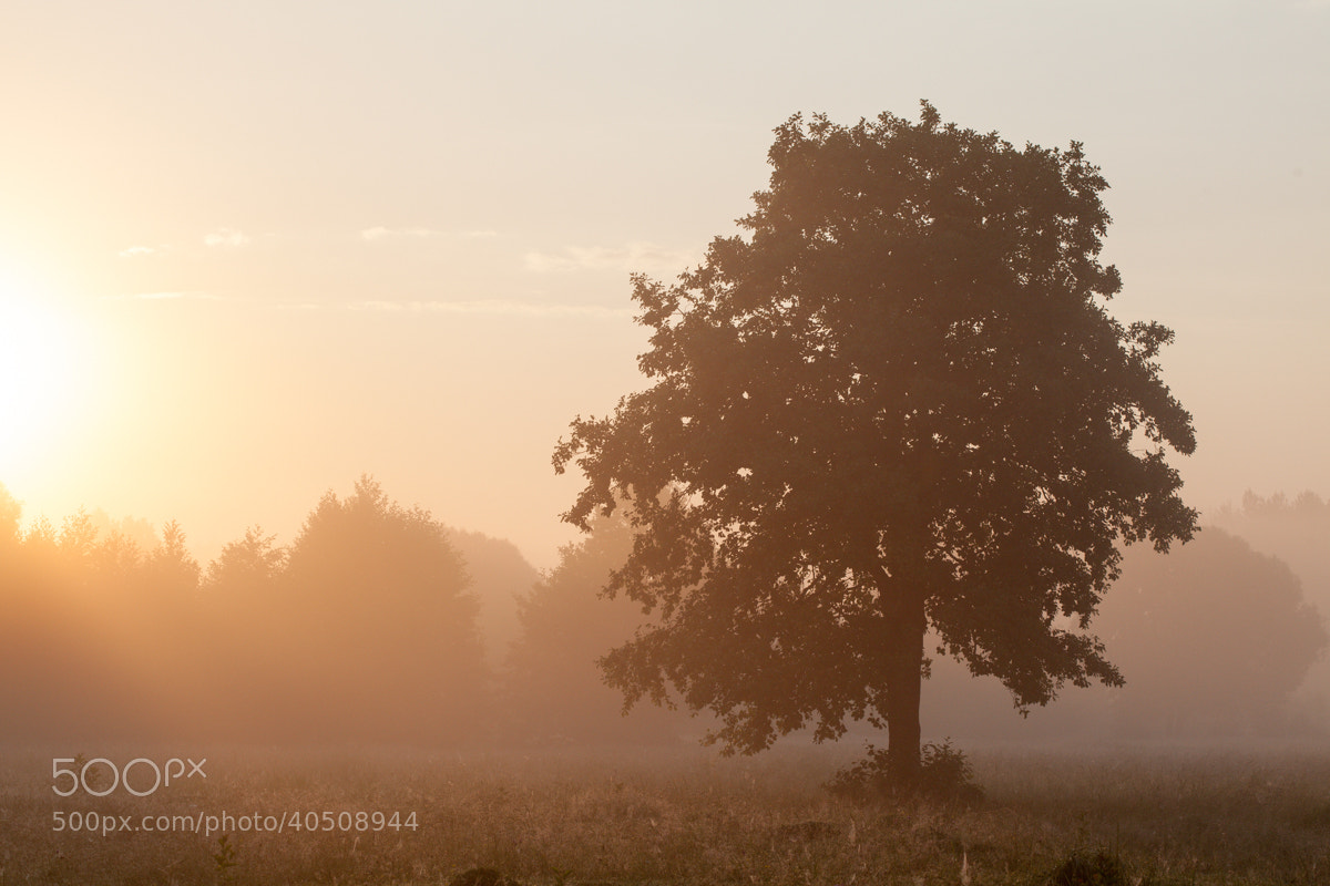 Photograph Foggy morning by Denis Belyaev on 500px