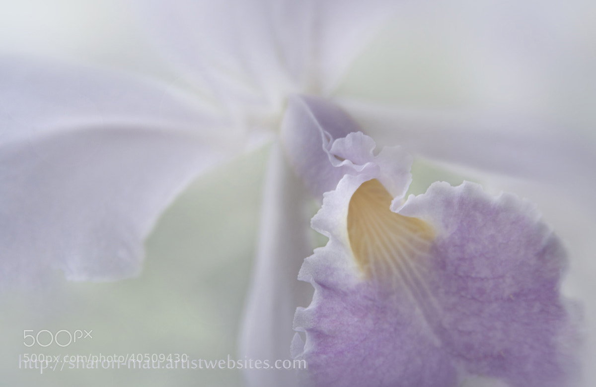 Photograph Beauty in a Whisper by Sharon Mau on 500px