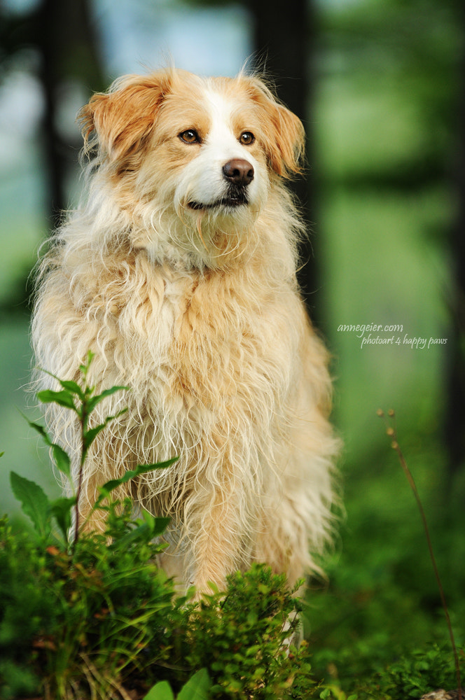 Photograph My lovely dog by Anne Geier on 500px