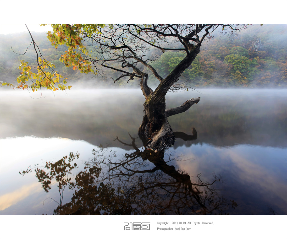 Photograph tree king by dul yi kim on 500px