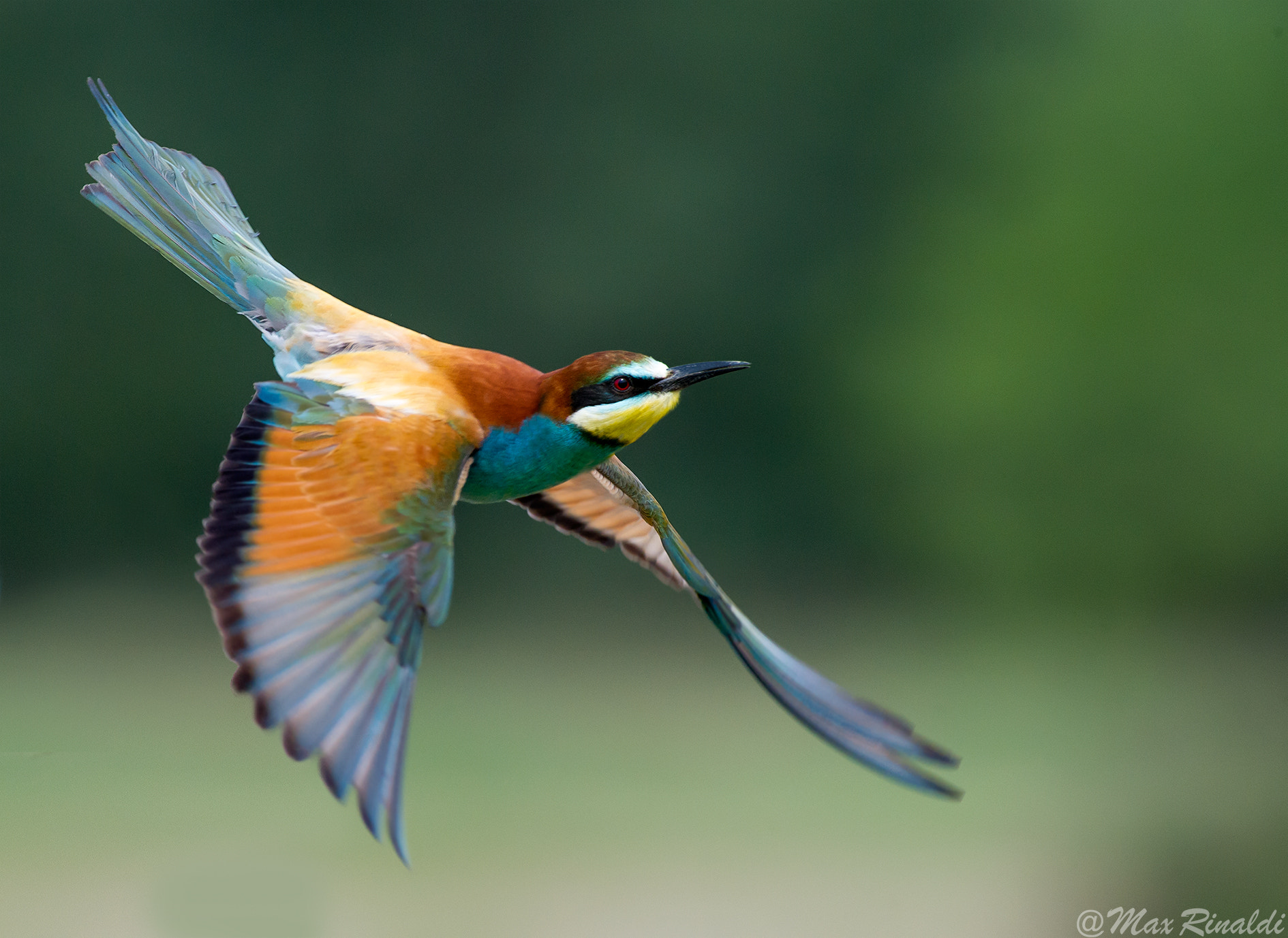 Photograph Gonna Fly Now by Max Rinaldi on 500px