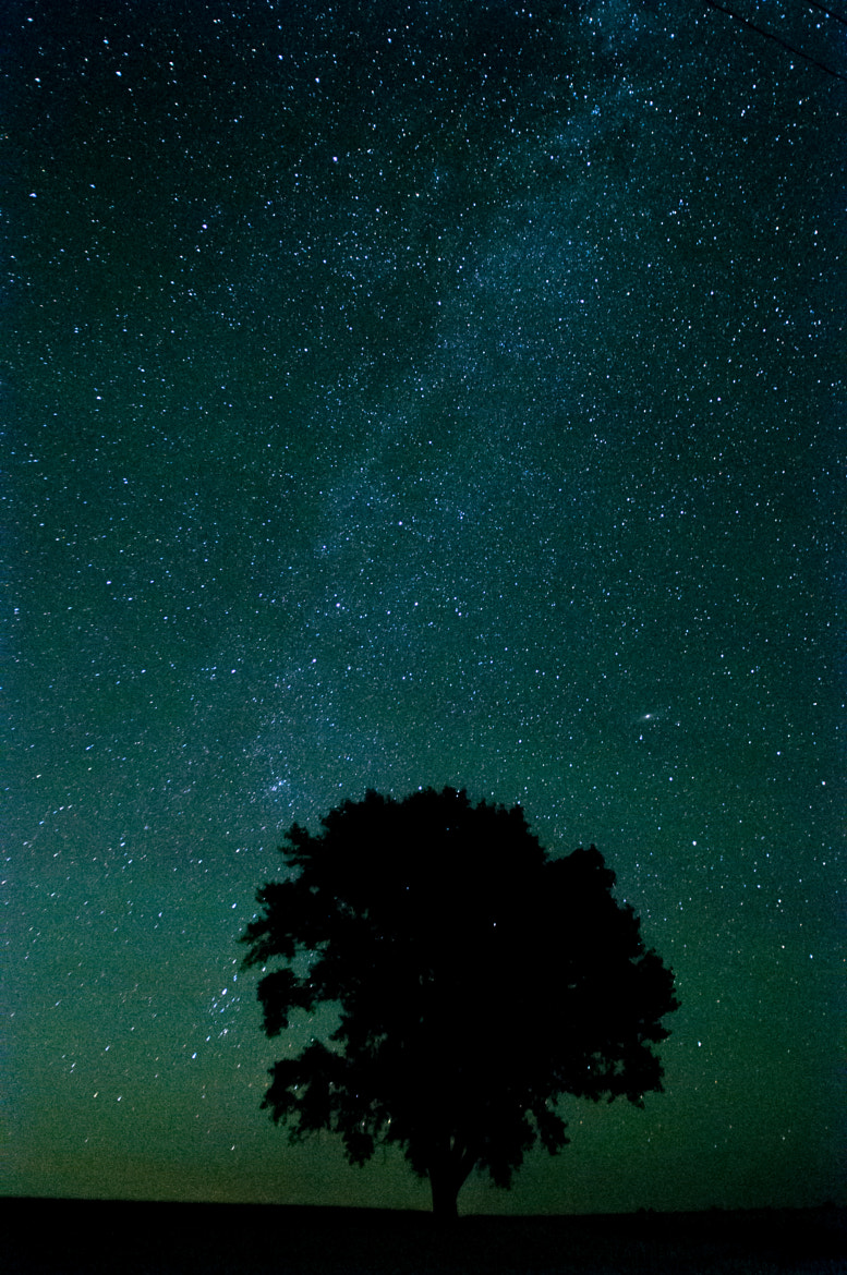 Photograph Tree stands in the night falling star by tamotsu matsui on 500px