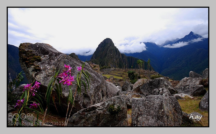Photograph Les fleurs de Machu Picchu by HUSEYIN AY on 500px