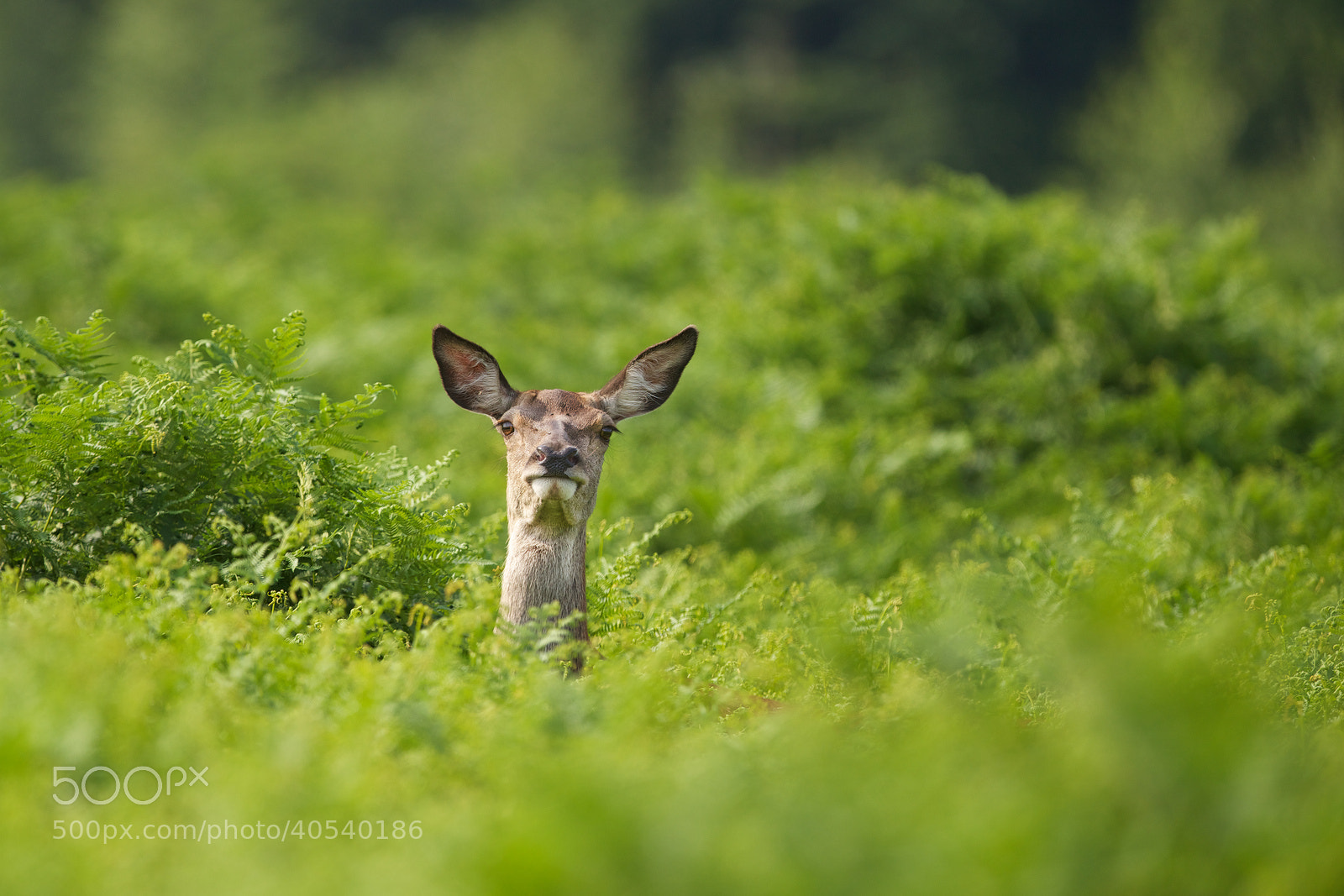 Photograph peek-a-boo! by Mark Bridger on 500px