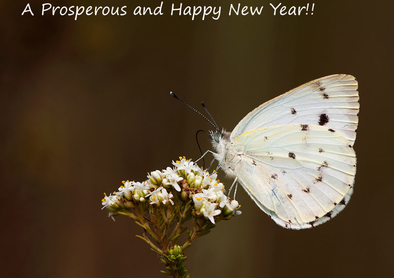 Photograph Prosperous 2012 by Desiré Darling on 500px