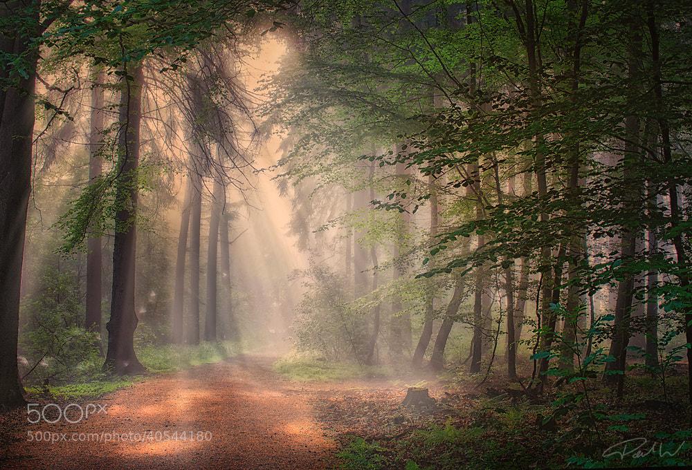 Photograph SunLights by Paul Wozniak on 500px