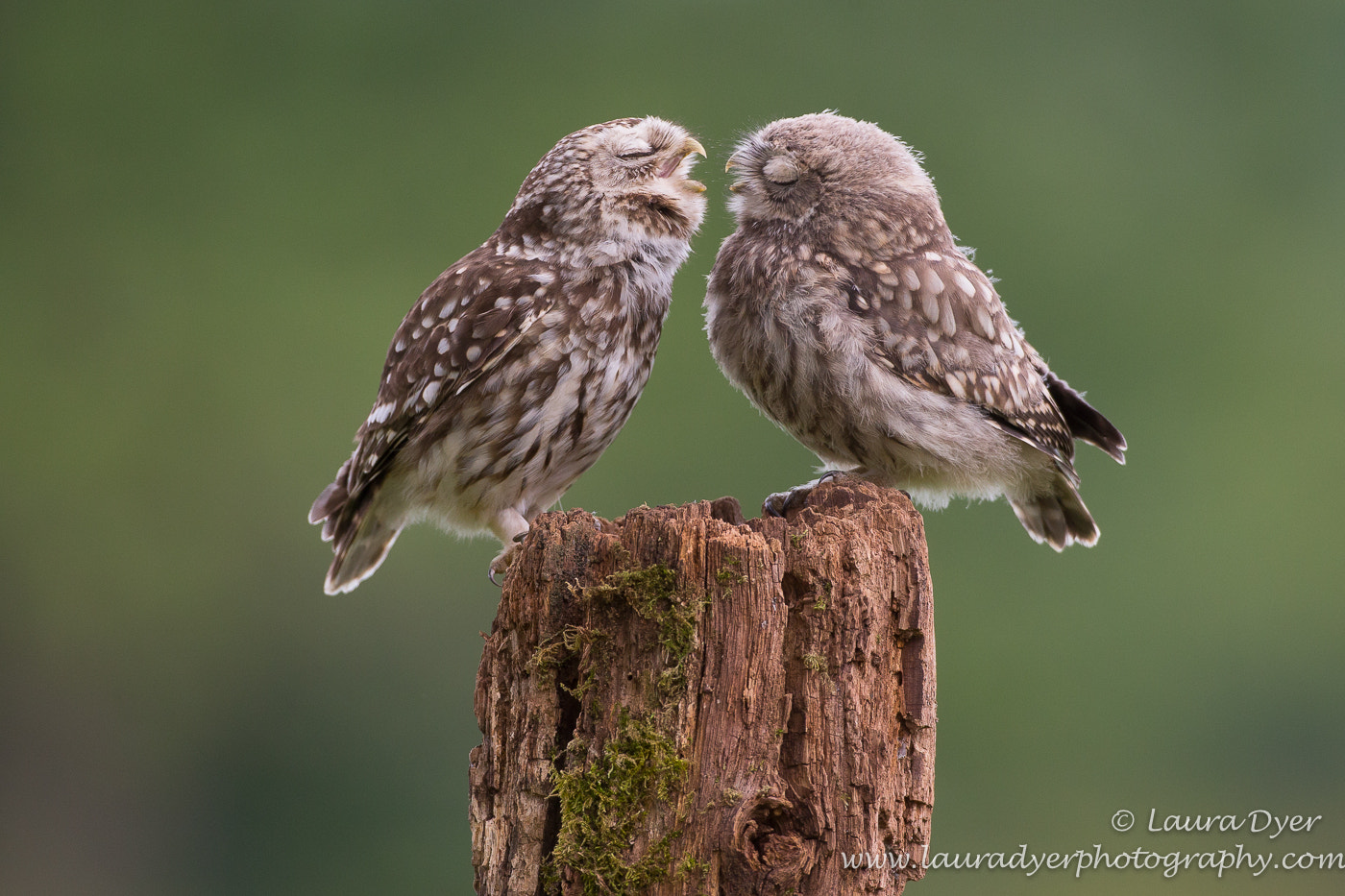 Photograph Just a Little Kiss by Laura Dyer on 500px