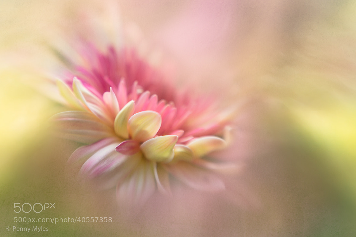 Photograph Homage to Pastel by Penny Myles on 500px