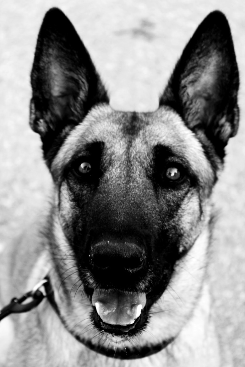 Photograph Dog by Michael Writer on 500px