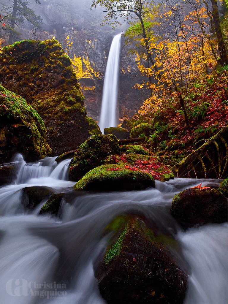 Photograph Falling For Elowah by Christina Angquico on 500px