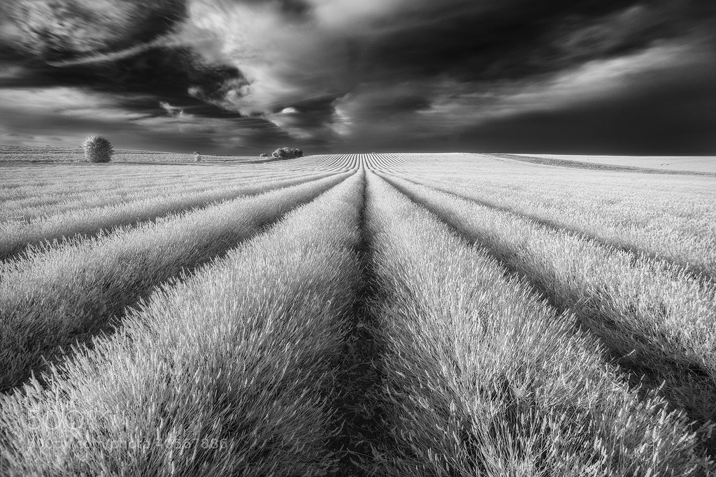 Photograph untitled by Mirek Galagus on 500px