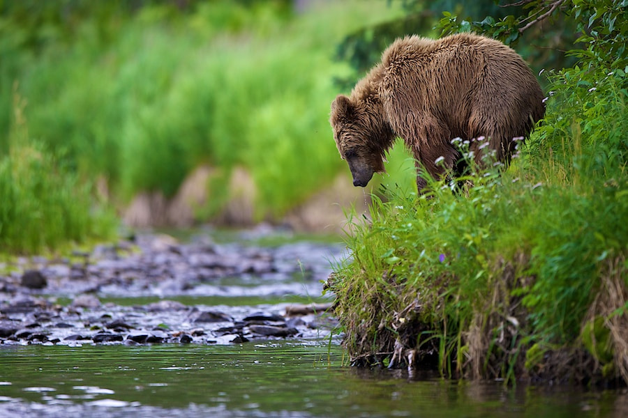 Photograph Where's The Salmon by Buck Shreck on 500px