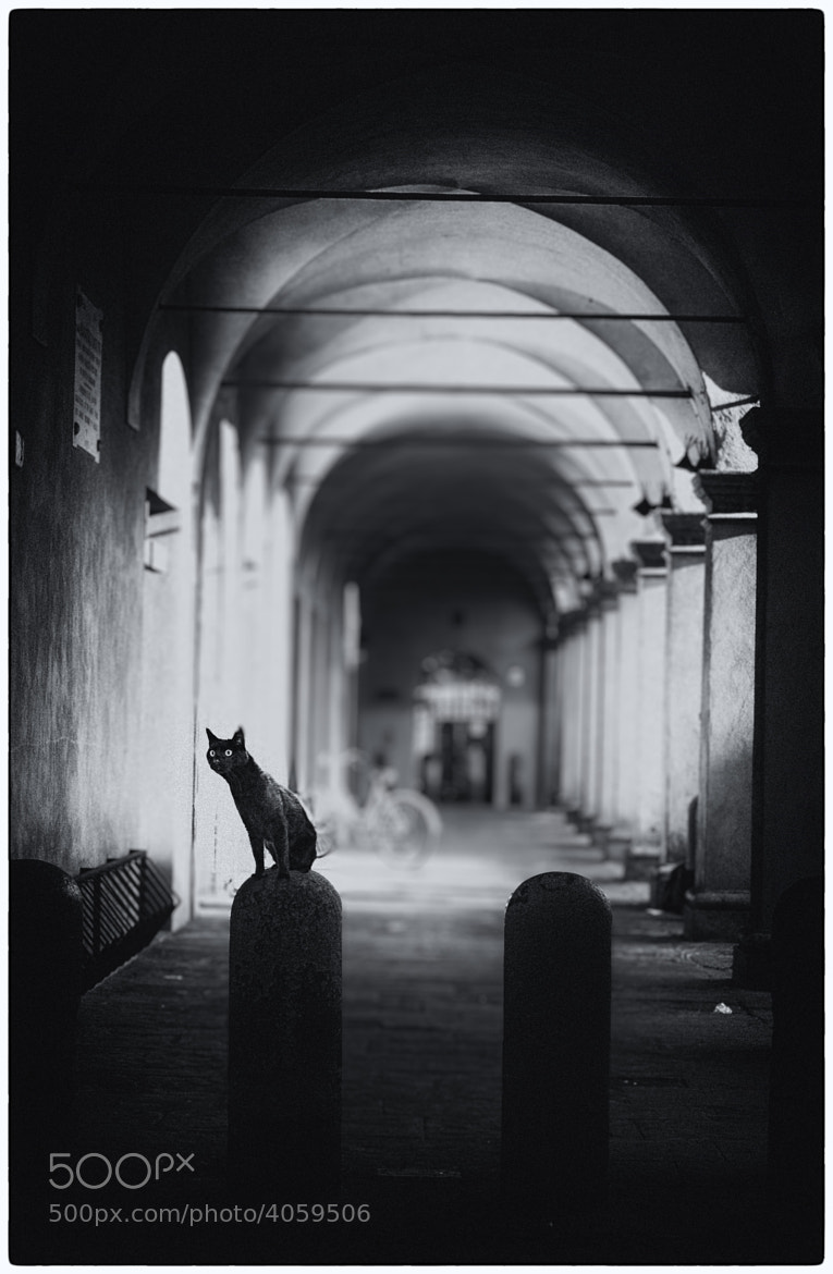 Photograph Dressed in black by Dario Monti on 500px