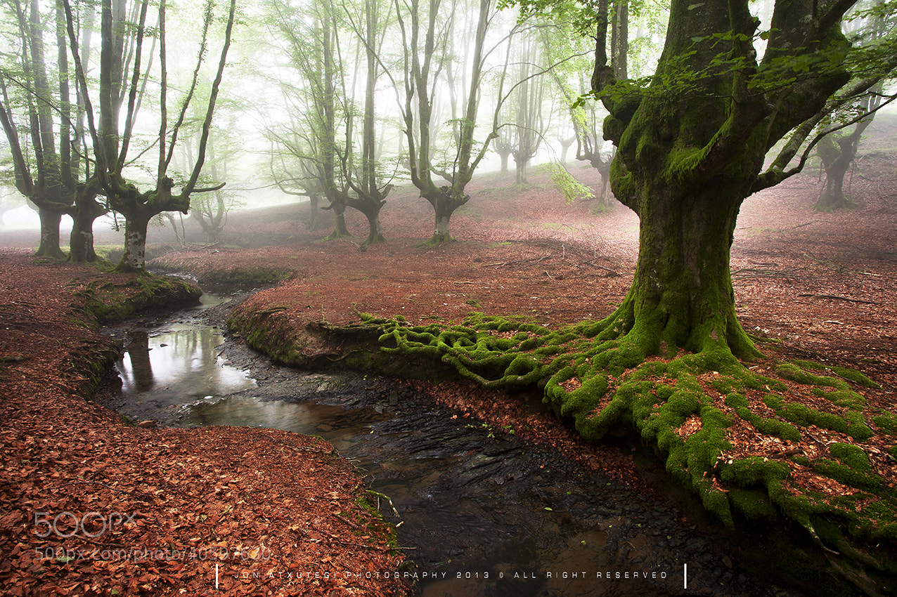 Photograph The tree snake by Jontake . . on 500px