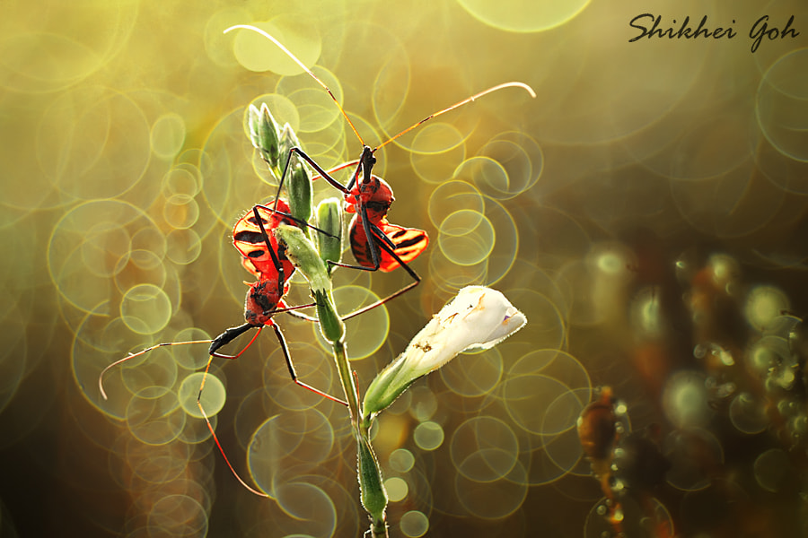 Photograph Sunbath by shikhei goh on 500px