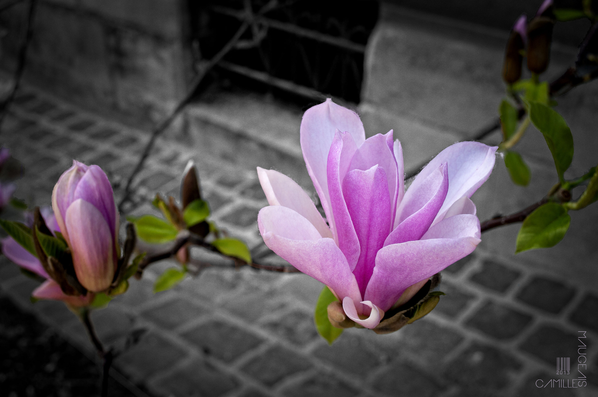Photograph Flower bloom by Camille Maugeais on 500px