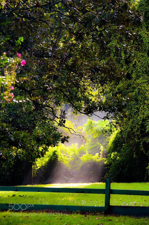 Photograph A Beautiful ray of sunlight... by Senthil Balakrishnan on 500px
