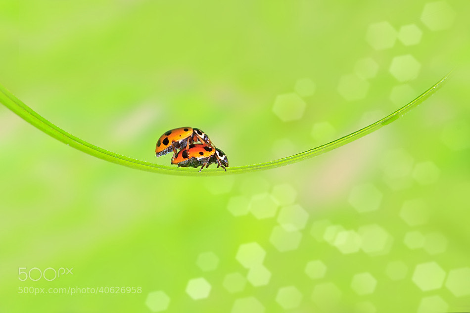 Photograph Beetles... by Nitin  Prabhudesai on 500px