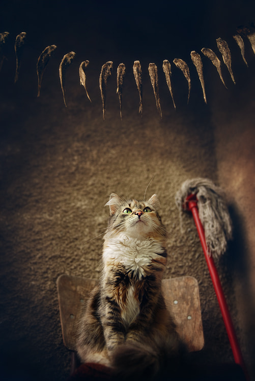 Photograph CAT & DRIED FISH... by Borgot B on 500px