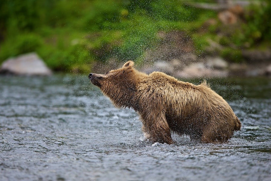 Photograph Shaking It Off by Buck Shreck on 500px