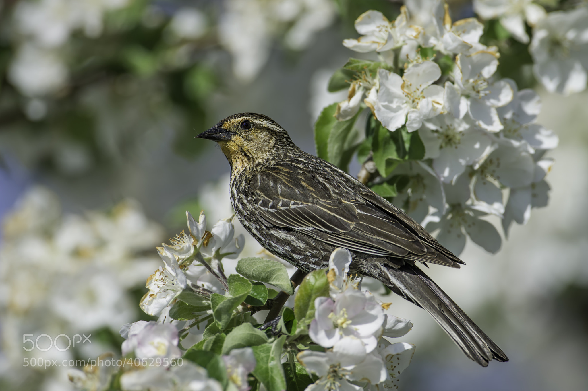 Photograph On a flowering perch by Daniel Parent on 500px