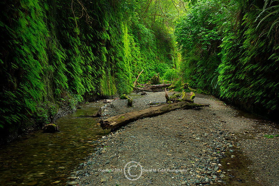 Photograph Fern Canyon by David Cobb on 500px