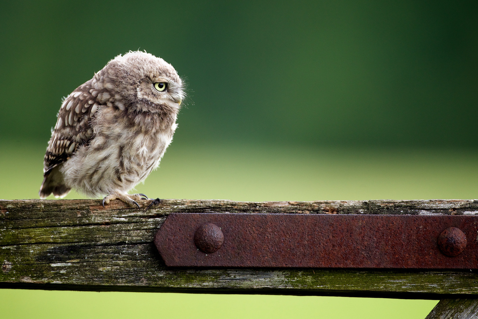 Photograph fuzzy by Mark Bridger on 500px