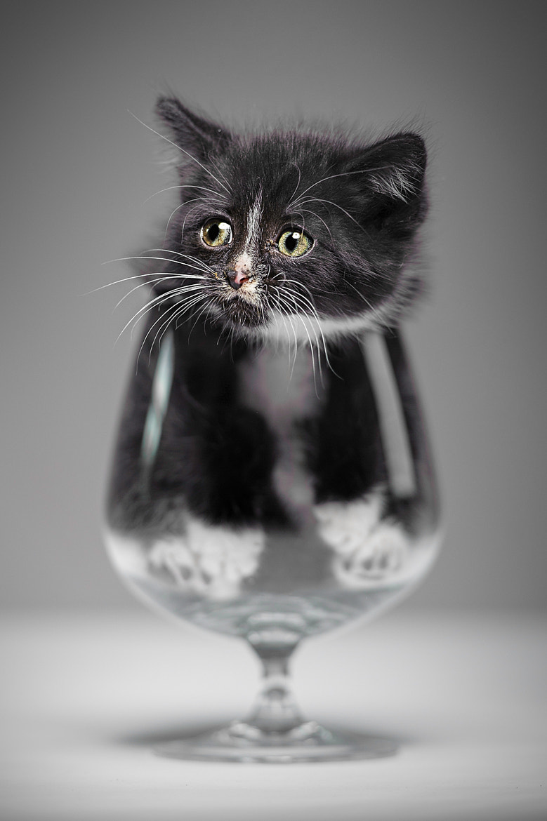 Photograph Have a drink? by Denis  on 500px