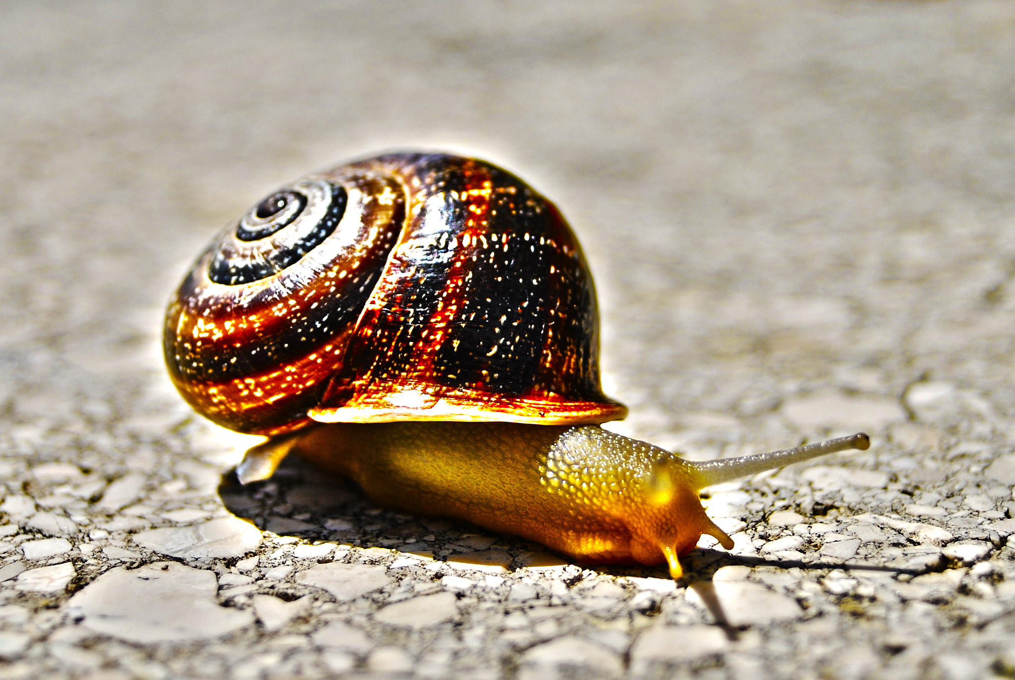Photograph Caracol by Rubén Torregrosa on 500px