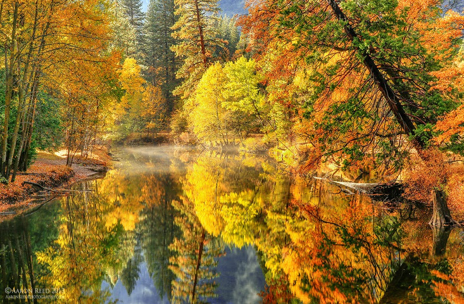 Photograph Golden by Aaron Reed on 500px