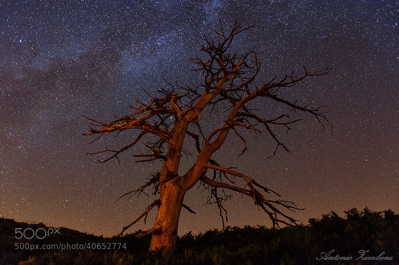 Photograph and the stars are watching by Antonio Zimbone on 500px