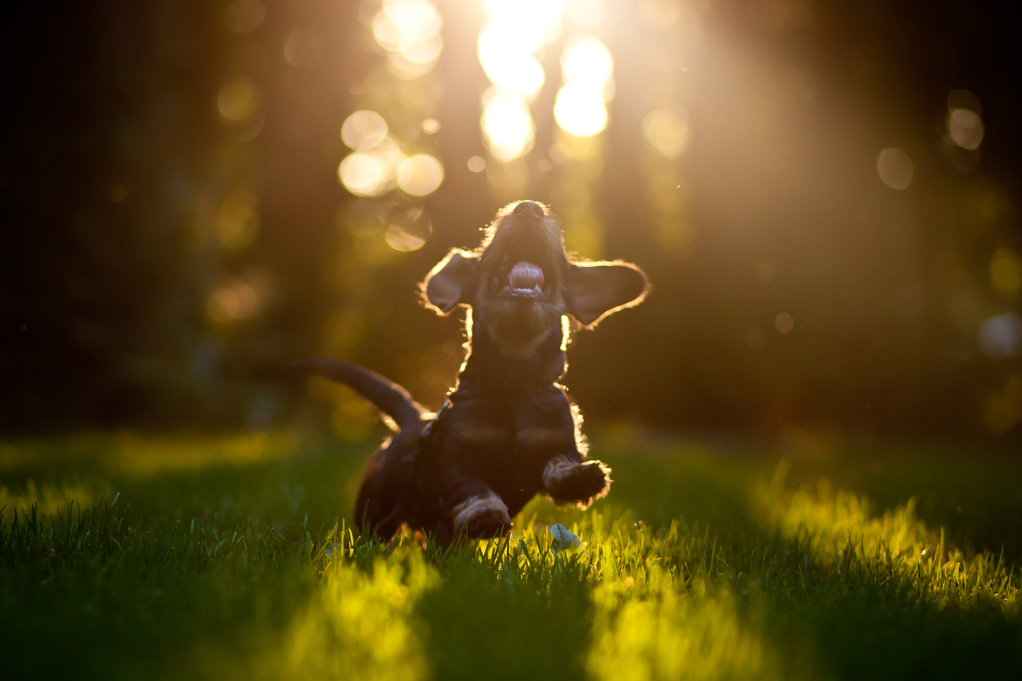 Photograph Happy puppy by Håkan Dahlström on 500px