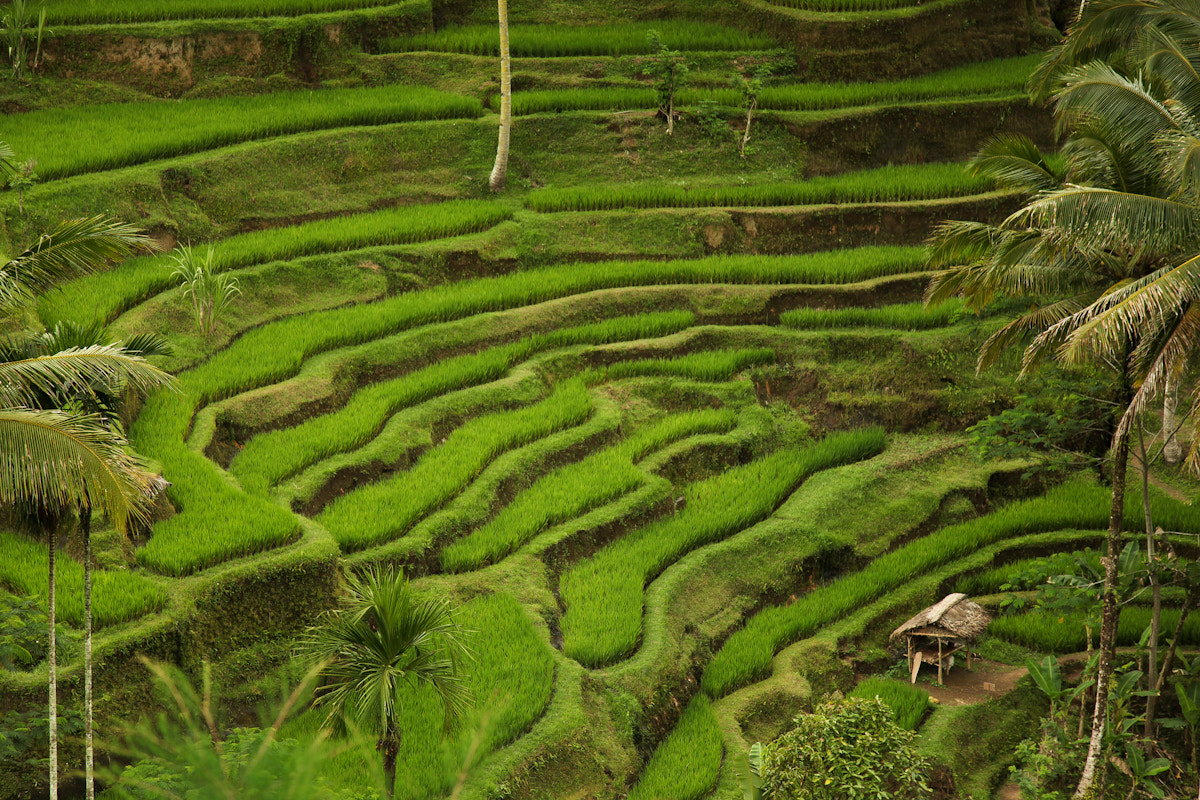 Photograph Rice Terrace by Nate Weiner on 500px