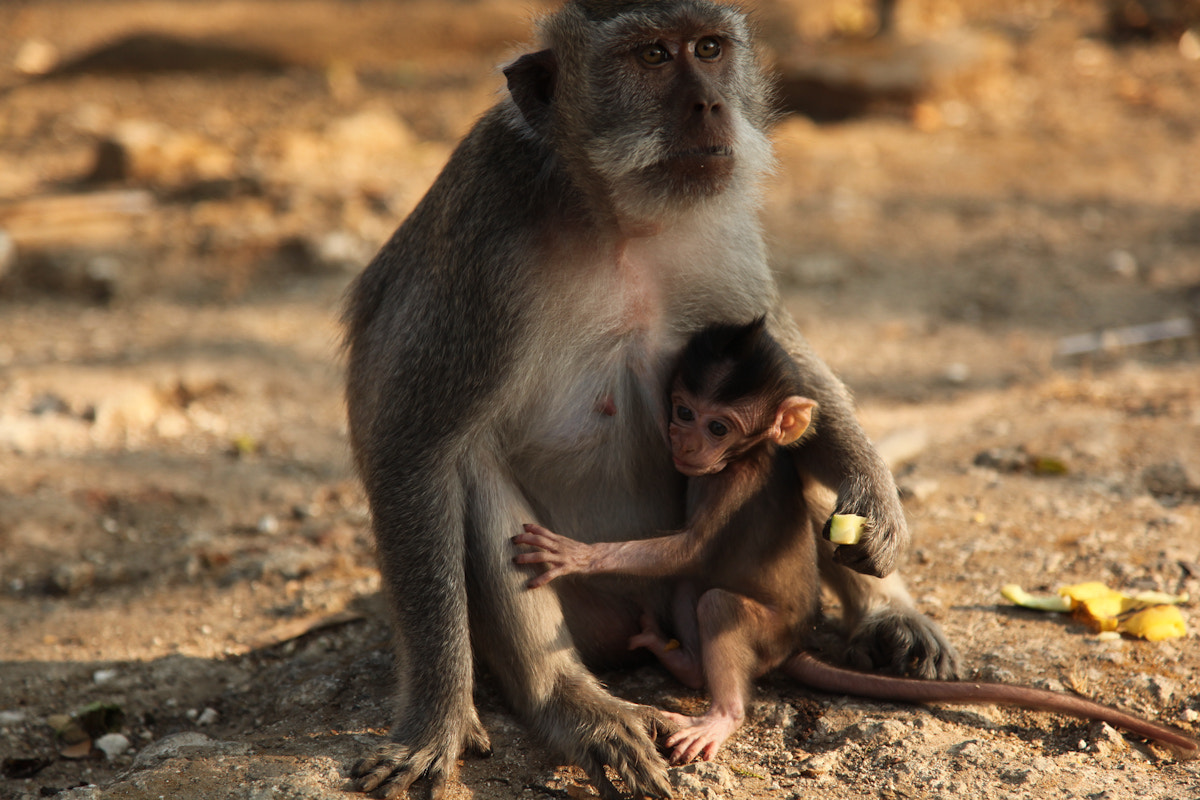 Photograph Baby Monkey by Nate Weiner on 500px