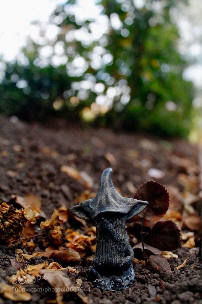 Photograph DAMN ELF by Juan Sierra Rviera on 500px